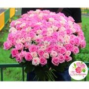 101 роза: розовая + нежно-розовая