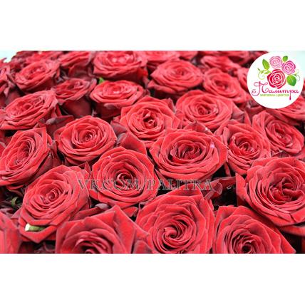 101 красная роза  в  форме сердца
