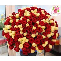 201 роза: красная + белая
