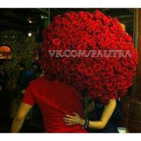 201 красная роза «Ред Наоми»