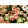 51 кустовая роза: розовая + белая