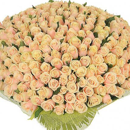 201 кремовая роза «Талея»