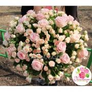 51 роза: нежно-розовая + кустовая кремовая