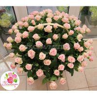 Корзина из 101 розы «Лав анлимитед»