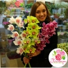 Орхидея «Цимбидиум» в ассортименте