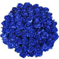 101 роза синяя