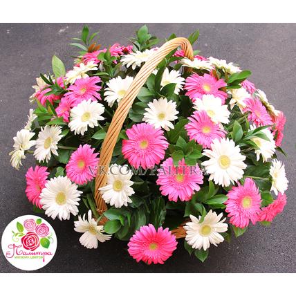 Корзина с 51 герберой: белые + розовые