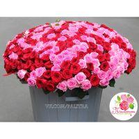 365 роз: розовые + красные