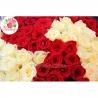 151 роза: бордовая  + белая