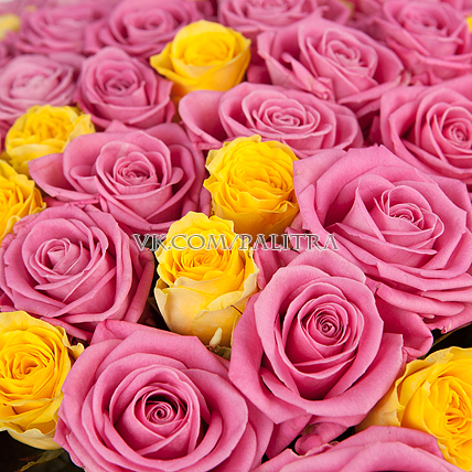 101 роза : желтая + розовая