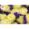 251 белая роза «Вайт Наоми», статица