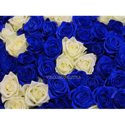 101 роза: синие + белые