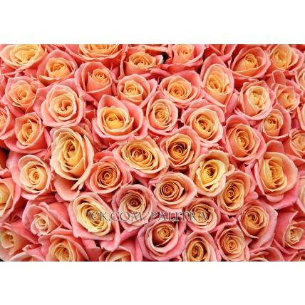 101 роза коралловая в форме сердца