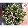 101 тюльпан бело-розовый