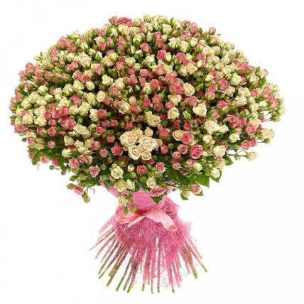 101 кустовая роза бело-розовая