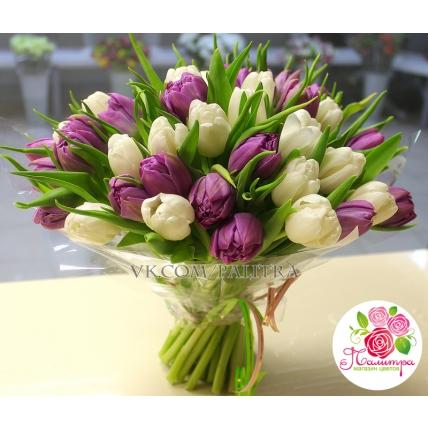 51 тюльпан бело-сиреневый