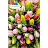 101 тюльпан  МИКС в натуральной упаковке