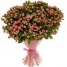 41 кустовая роза розовая