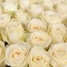 101 роза белая
