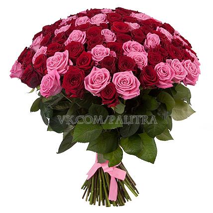 101 роза красно - розовая
