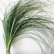 Зелень «Беарграсс» фото