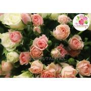Кустовая роза фото