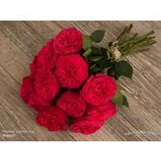 Роза пионовидная кустовая «Red piano» фото