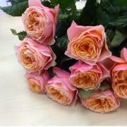 Роза пионовидная «Вувузела» фото