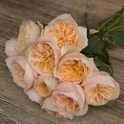 Роза Девида Остина пионовидная «Juliet» фото