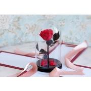Роза стабилизированная фото